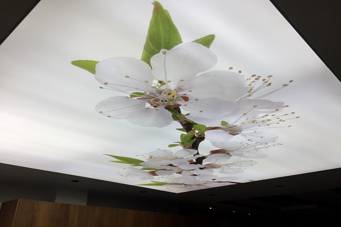 سقف کشسان -نوسا دکور